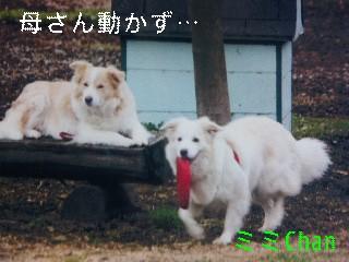 12月2日のお友達_d0148408_17133719.jpg