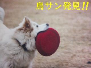 12月2日のお友達_d0148408_17133736.jpg