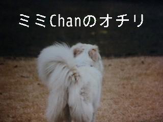 12月2日のお友達_d0148408_17133752.jpg