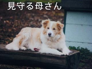 12月2日のお友達_d0148408_17133760.jpg