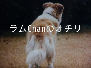 12月2日のお友達_d0148408_17133765.jpg