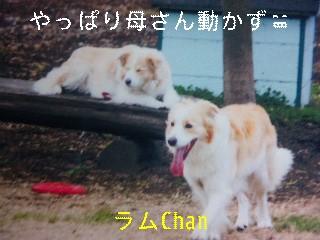 12月2日のお友達_d0148408_17133798.jpg
