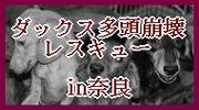 e0209716_9434525.jpg