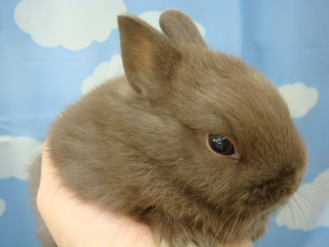 ウサギ・モルモット・チンチラ・インコ_f0189122_17181733.jpg