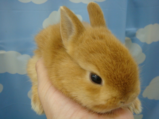 ウサギ・モルモット・チンチラ・インコ_f0189122_1718436.jpg