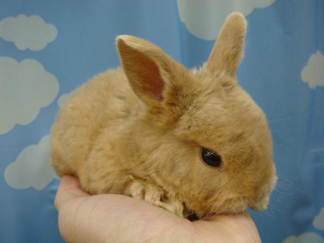 ウサギ・モルモット・チンチラ・インコ_f0189122_17232072.jpg