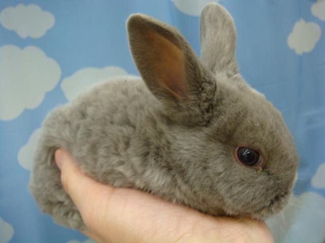 ウサギ・モルモット・チンチラ・インコ_f0189122_1723713.jpg