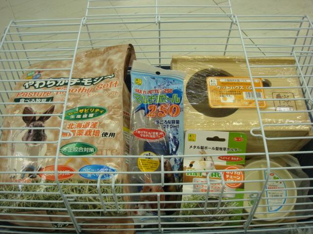 ウサギ・モルモット・チンチラ・インコ_f0189122_17352285.jpg