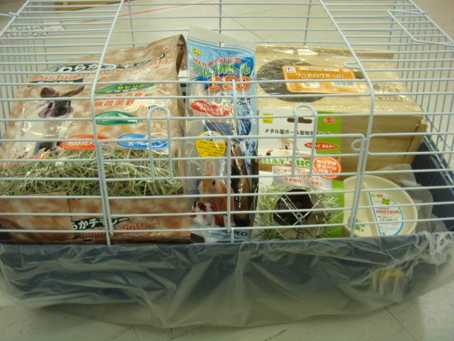 ウサギ・モルモット・チンチラ・インコ_f0189122_17353569.jpg