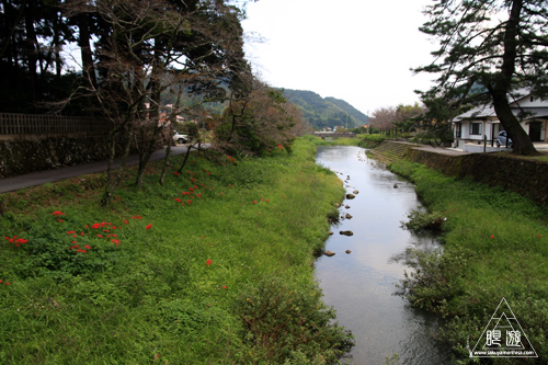 118 熊野大社 ~ヒガンバナの朱色~_c0211532_13411550.jpg