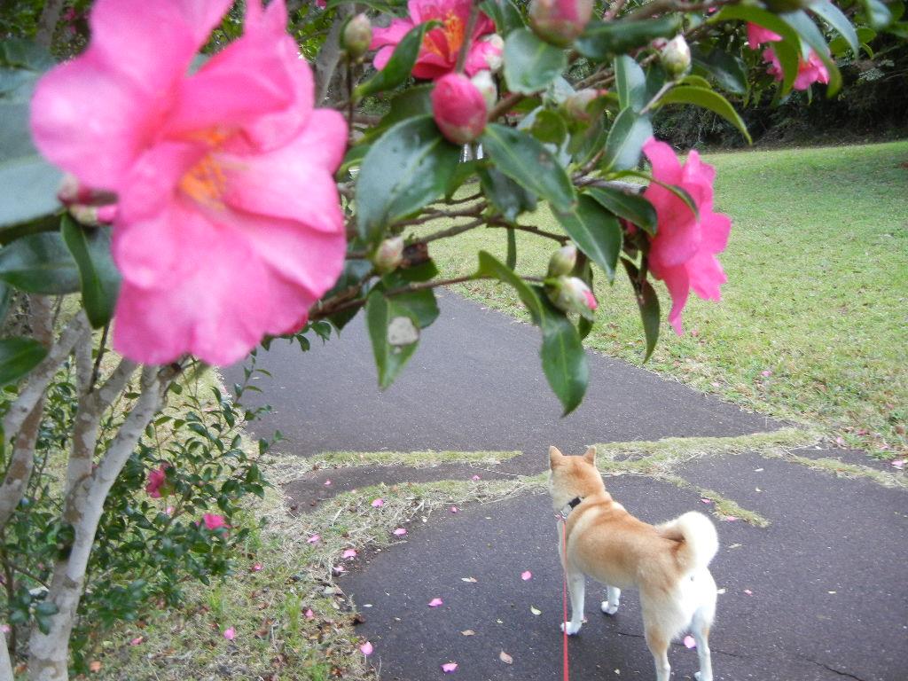 2011年12月2日(金)寒い日の楽しい過ごし方!_f0060461_10451776.jpg