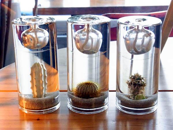 Cactus oil lamp_a0025778_15365554.jpg