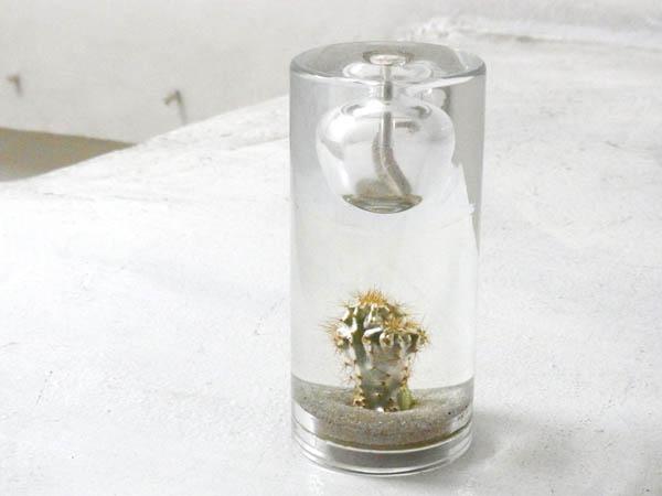 Cactus oil lamp_a0025778_15372134.jpg