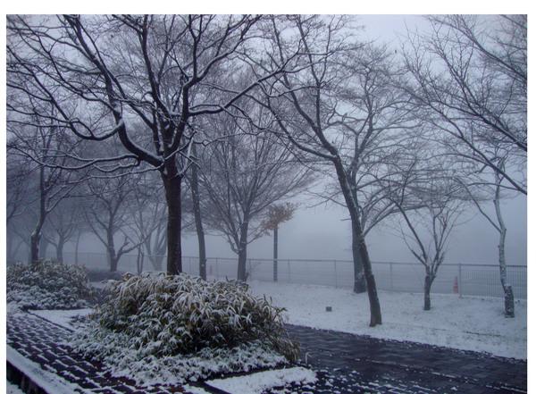【 軽井沢インテリア 5  】 雪の軽井沢 と クリスマスデコレーション ♪_d0037284_9261539.jpg