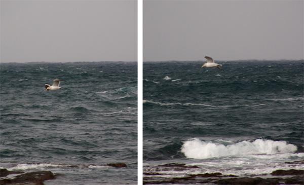 初冬の日本海。五能線と茅葺き民家など_a0136293_17311444.jpg