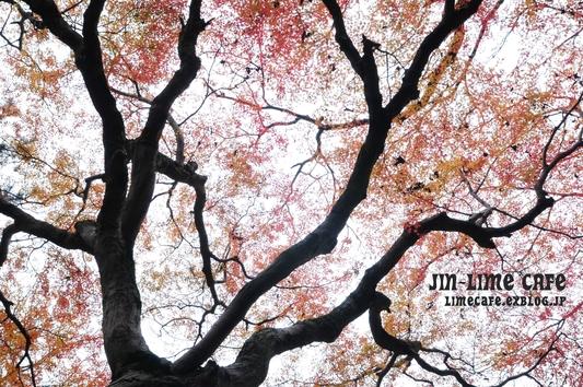 曇り空に紅葉_e0222506_3143434.jpg