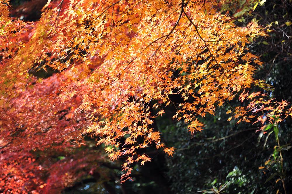 太宰府の紅葉 2011_a0042310_20334163.jpg