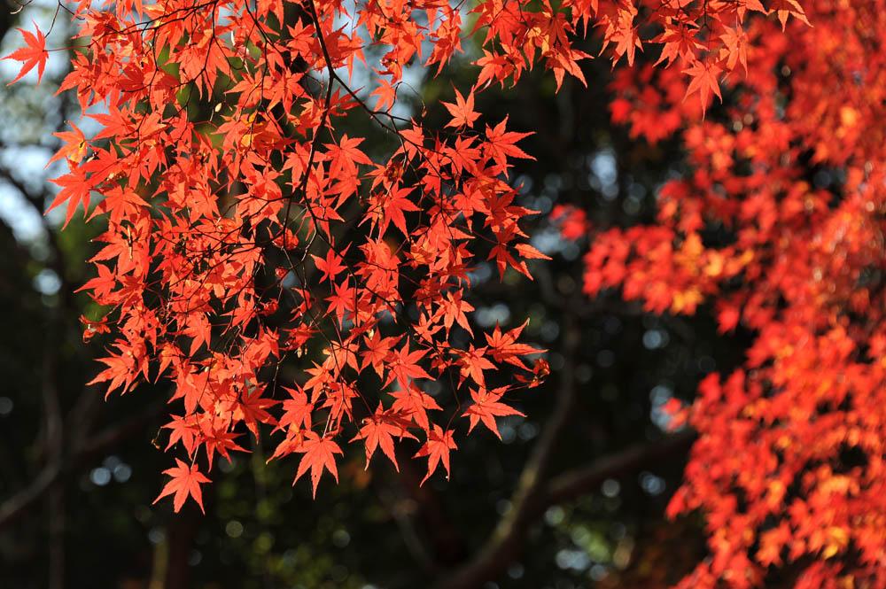太宰府の紅葉 2011_a0042310_20344915.jpg