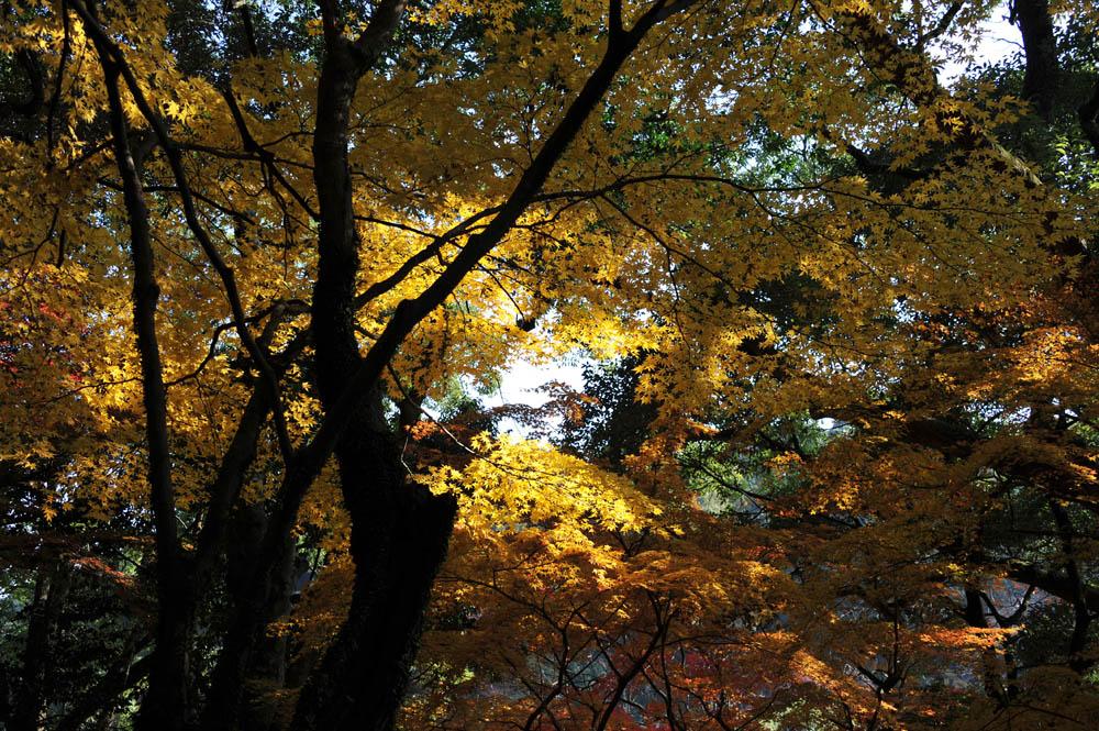 太宰府の紅葉 2011_a0042310_2036764.jpg