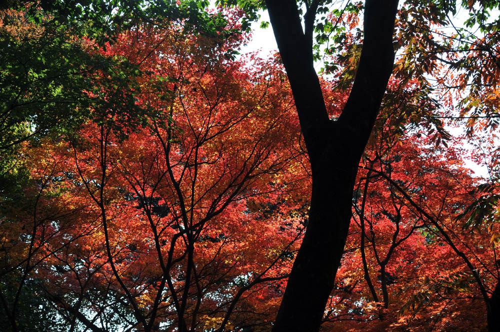 太宰府の紅葉 2011_a0042310_20383329.jpg