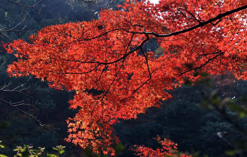 太宰府の紅葉 2011_a0042310_20411772.jpg