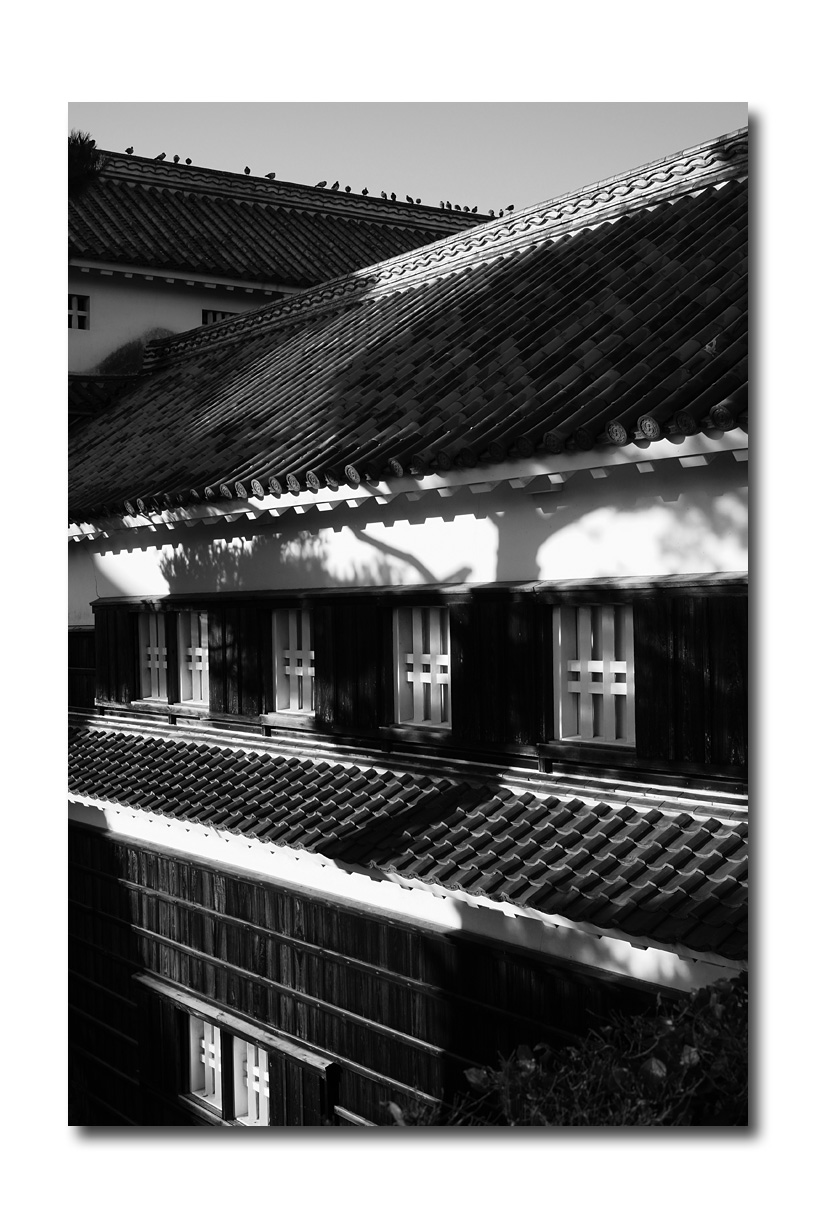 高知城にて_e0214724_14153823.jpg