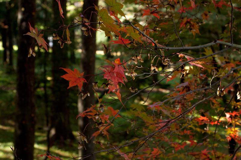 #1173 樹木公園_b0177233_5162262.jpg