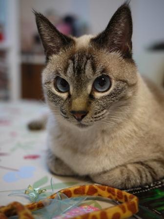 猫のお友だち ちゃるちゃんあさりちゃん編。_a0143140_0272488.jpg