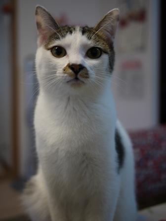 猫のお友だち ちゃるちゃんあさりちゃん編。_a0143140_0275561.jpg