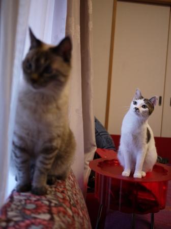 猫のお友だち ちゃるちゃんあさりちゃん編。_a0143140_0284092.jpg