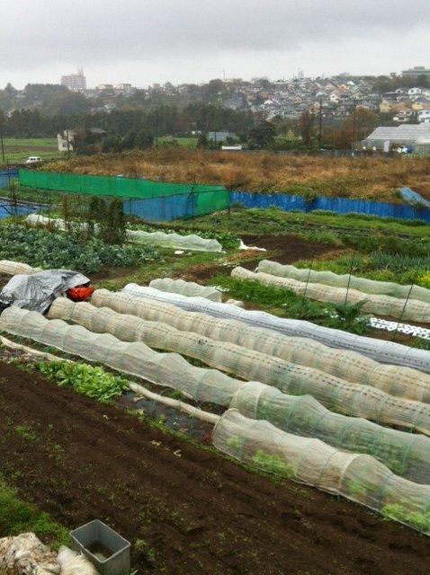 おお~大雨に風・・・収穫風景は撮れませんでした_c0222448_12491716.jpg