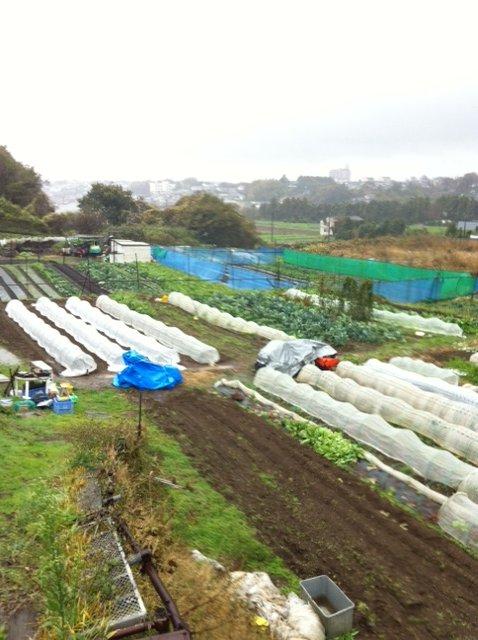 おお~大雨に風・・・収穫風景は撮れませんでした_c0222448_1249323.jpg