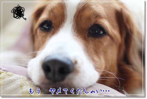 d0013149_0403384.jpg