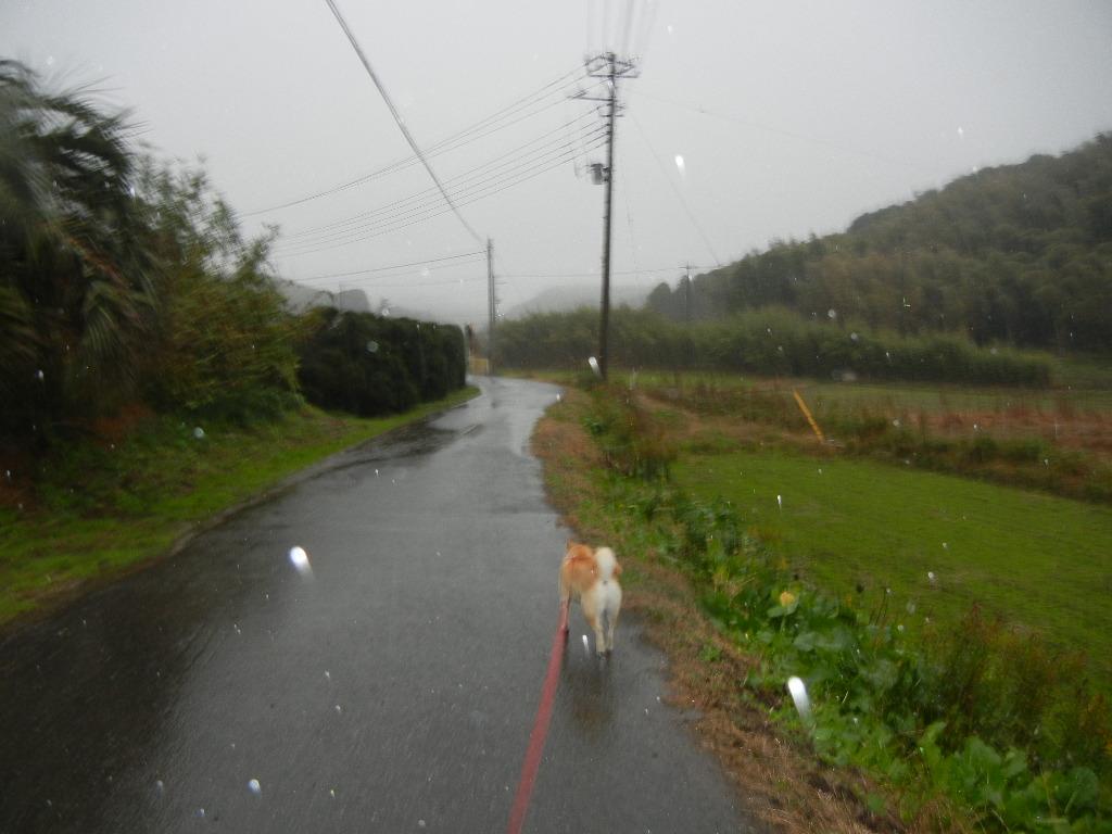 2011年12月3日(土)地震と大雨!_f0060461_936058.jpg