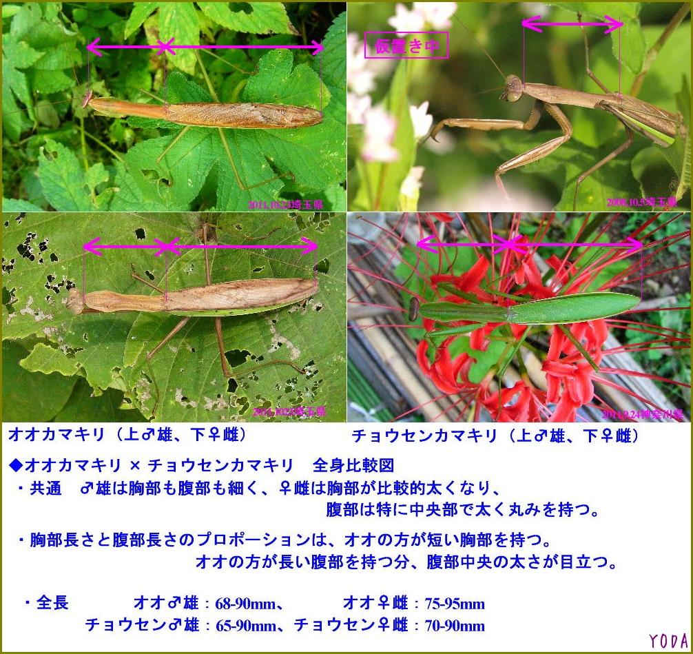 a0146869_5202699.jpg
