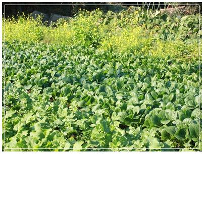 畑にお呼ばれ。収穫祭に参加させていただきました。_c0141025_0314226.jpg