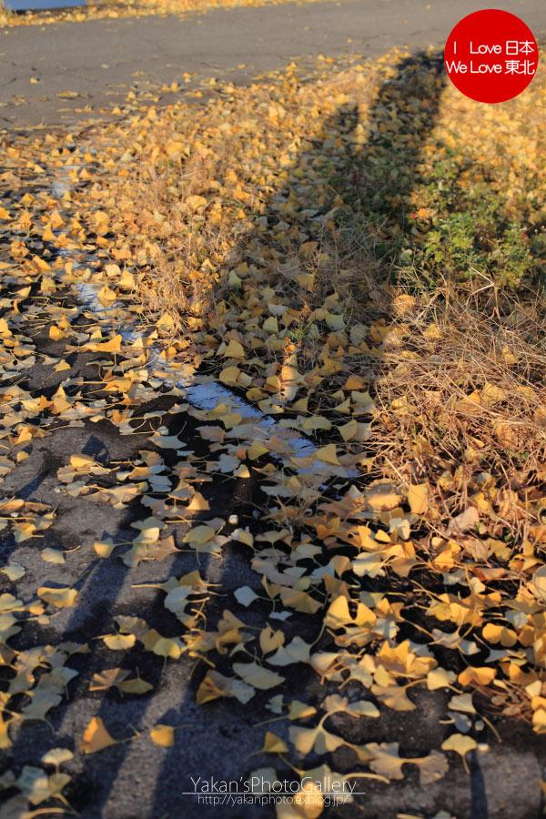 娘と秋の散歩道_b0157849_16525172.jpg
