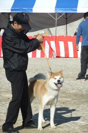 秋田犬展覧会_d0069964_2162949.jpg