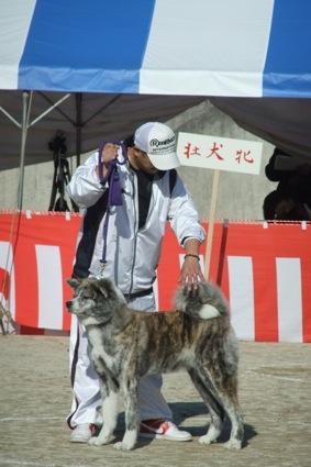 秋田犬展覧会_d0069964_2174933.jpg