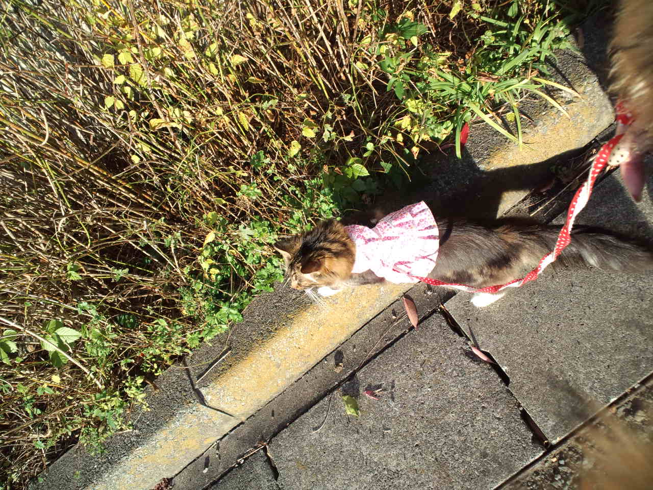 お散歩 と 紅葉_c0151965_20545788.jpg