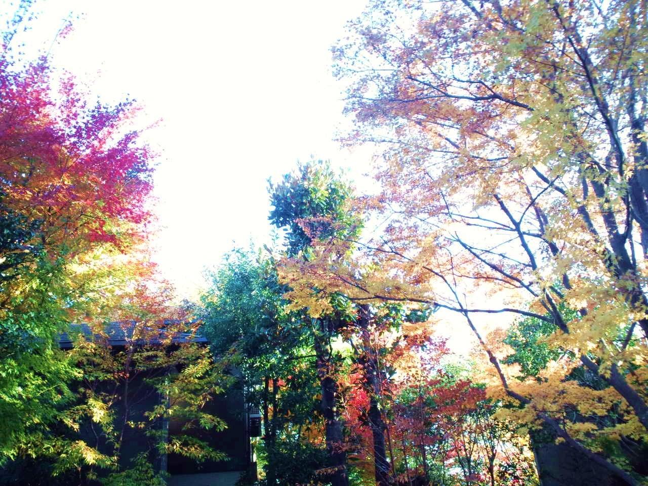 お散歩 と 紅葉_c0151965_2059270.jpg