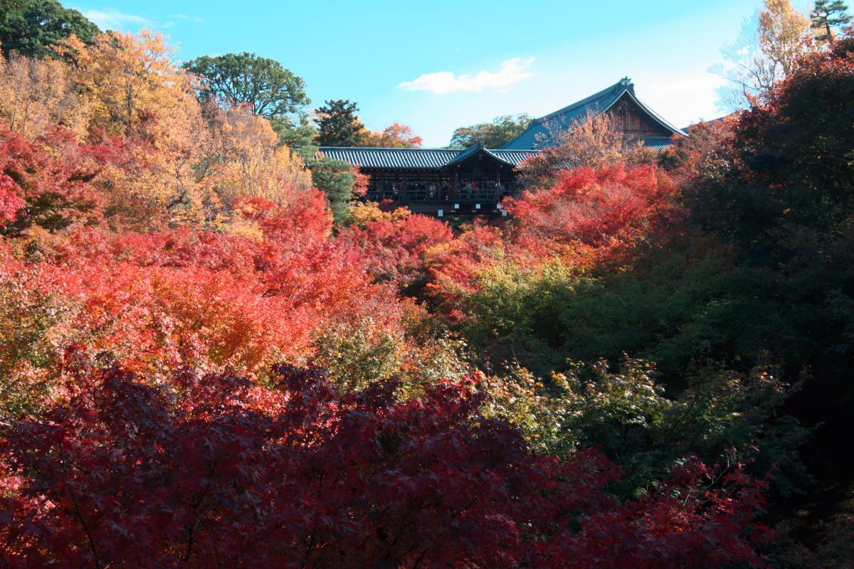 紅葉 2011  東山   東福寺_f0021869_1105448.jpg