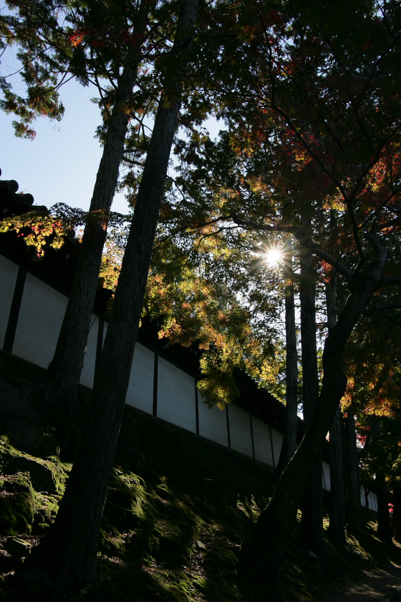 紅葉 2011  東山   東福寺_f0021869_1134229.jpg