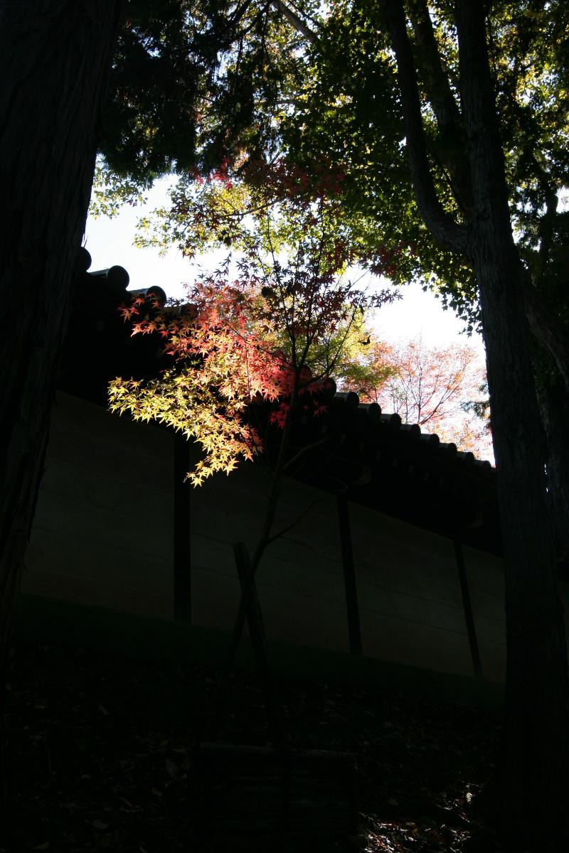 紅葉 2011  東山   東福寺_f0021869_11466.jpg