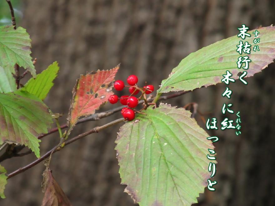 f0137096_1903210.jpg