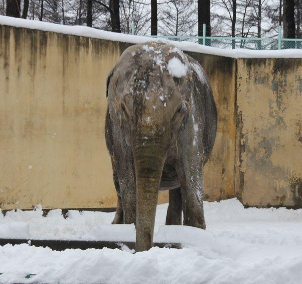 ナナちゃんの雪浴び_c0155902_20503455.jpg