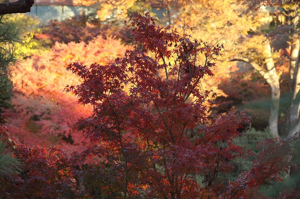 紅く燃える山と風に舞う煙 - 2011年初冬・上越線 -_b0190710_23364179.jpg