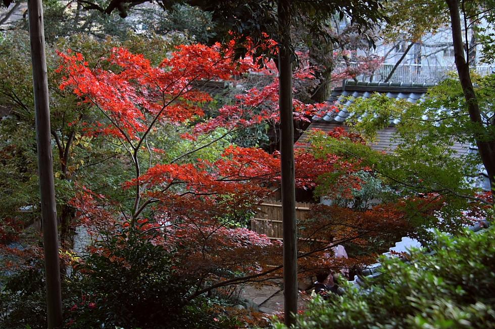 紅く燃える山と風に舞う煙 - 2011年初冬・上越線 -_b0190710_2337429.jpg