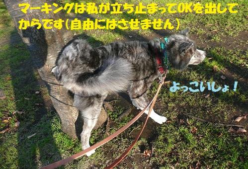 f0121712_1448441.jpg