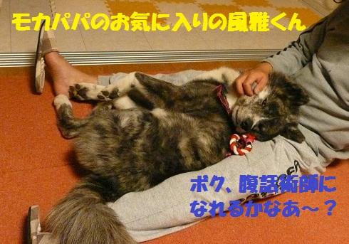 f0121712_1563271.jpg